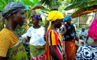 Supplementary livelihoods: Beekeeping